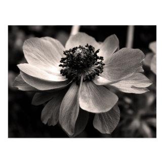 Postal floral de la fotografía de la anémona de la