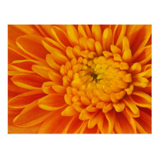 Postal floral de la momia anaranjada