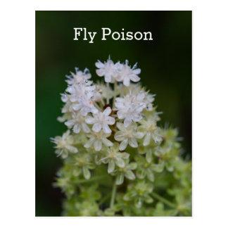 Postal floral del nombre blanco del Wildflower del