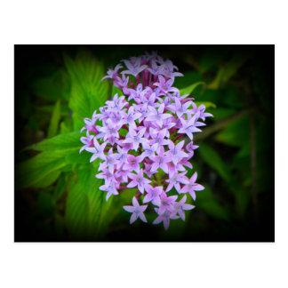 Postal floral púrpura tropical Maui Hawaii