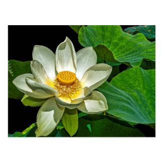 Postal Florecimiento de Lotus