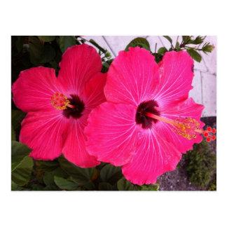 Postal flores