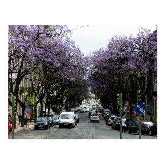 Postal Flores de la púrpura de Lisboa
