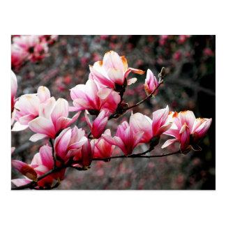 Postal Flores de la universidad de Georgetown,