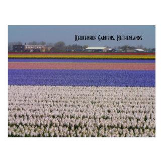 Postal Flores de los Países Bajos