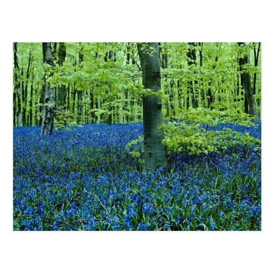 Postal Flores de maderas del Bluebell de la aguamarina