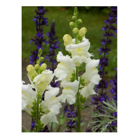 Postal Flores del Acadia