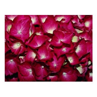 Postal Flores del Delphinium