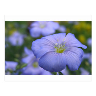 Postal Flores del lino