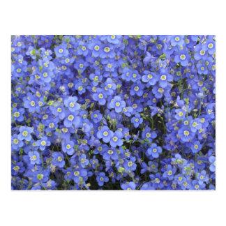 Postal Flores del lino en los jardines de Longwood,