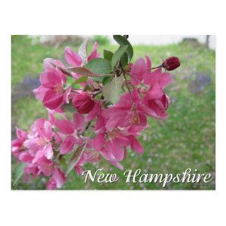 Postal Flores del manzano de cangrejo de New Hampshire