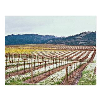 Postal Flores en el viñedo, valle de Alexander,