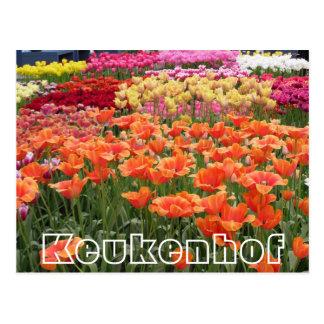 Postal Flores en Keukenhof, el naranja, el amarillo y el