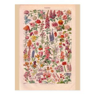Postal Flores históricas del vintage