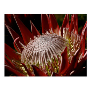 Regalos Flores Exoticas Rojas Zazzle Es