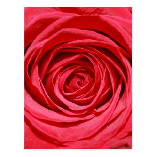 Postal Flores románticas sedosas de los pétalos de rosas