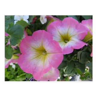 Postal Flores rosadas