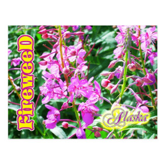 Postal Flores rosadas del Fireweed en Alaska