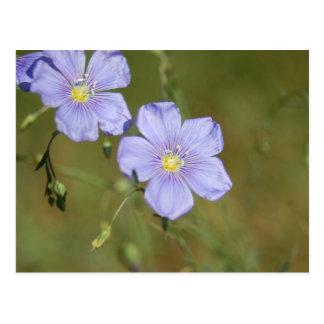 Postal Flores salvajes 2 del lino