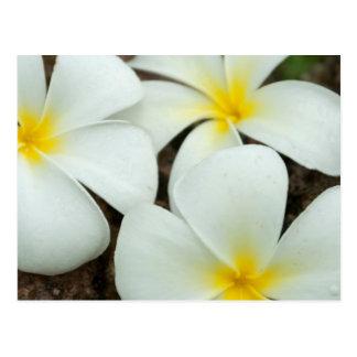Postal Flores tropicales preciosos en el South Pacific