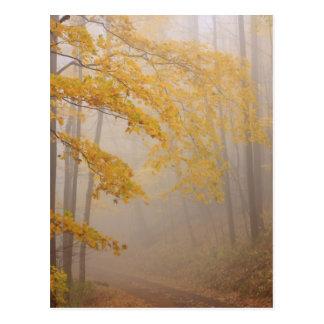 Postal Follaje de la niebla y del otoño, Great Smoky