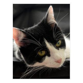 Postal Foto blanco y negro de la cara del gato