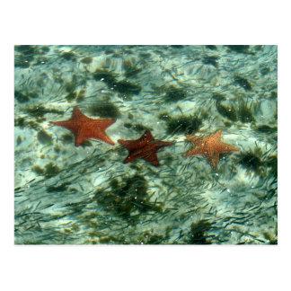 Postal Foto de las estrellas de mar de Belice