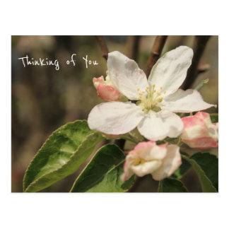 """Postal Foto de los flores de Apple en Sun: """"Pensando en"""