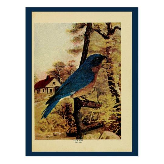 Postal Foto del litho del color del bluebird del vintage