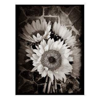 Postal Foto hermosa del ramo del girasol en negro y