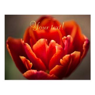Postal Foto roja bonita de los pétalos del tulipán. Añada