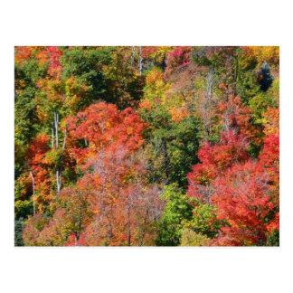 Postal Fotografía colorida de la naturaleza del otoño de
