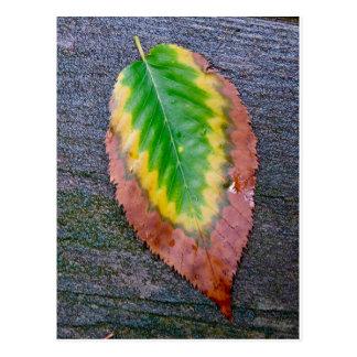 Postal Fotografía de la hoja del otoño