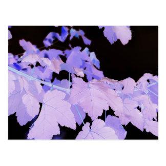 Postal Fotografía de Leaves~ de Lauren Perry~