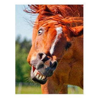 Postal Fotografía de risa del caballo divertido