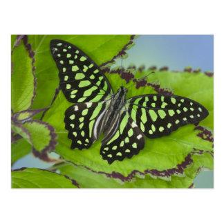 Postal Fotografía de Sammamish Washington de la mariposa