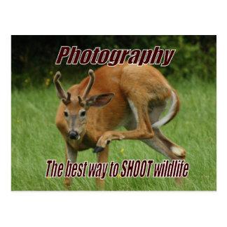 Postal Fotografía, la mejor manera DE TIRAR fauna