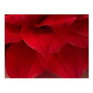Postal Fotografía roja de los pétalos de la dalia