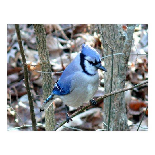 Postal Fotografías: pájaros -