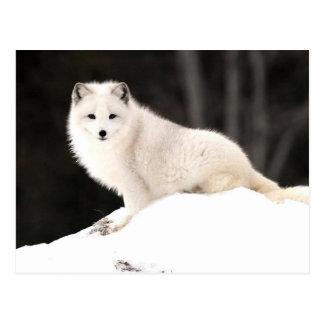 Postal Fox ártico