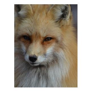 Postal Fox astuto