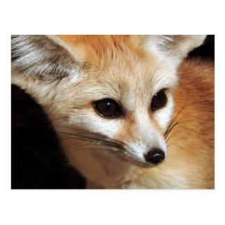 Postal Fox de Fennec