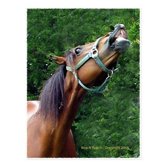 Postal Frambuesa del caballo (estilo del caballo de la