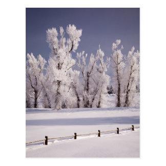 Postal Frost cubrió los árboles y la cerca, Colorado