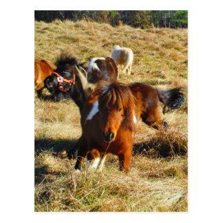 Postal Funcionamiento miniatura de los caballos de Brown