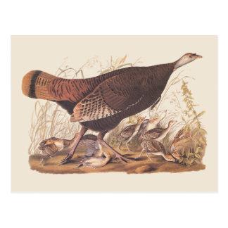 Postal Gallina y polluelos de Audubon Turquía en otoño