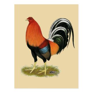 Postal Gallo de trigo del gallo de pelea
