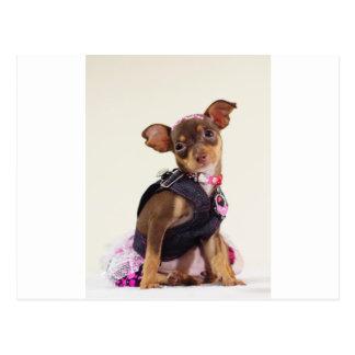 Postal gama del perro de la chihuahua