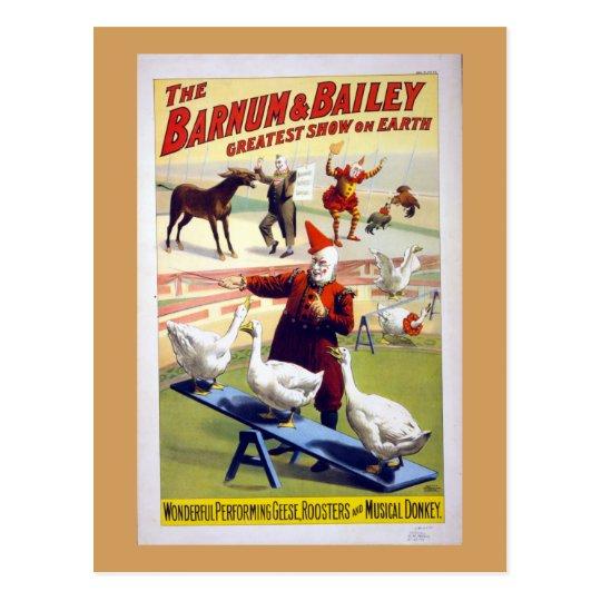 Postal Gansos del circo del vintage, gallos y un burro