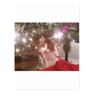 Postal gatito del navidad